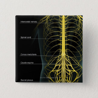 Trunk Nerve Supply Pinback Button