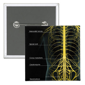 Trunk Nerve Supply Pinback Button
