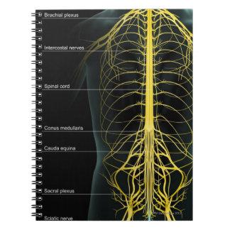 Trunk Nerve Supply Spiral Notebook