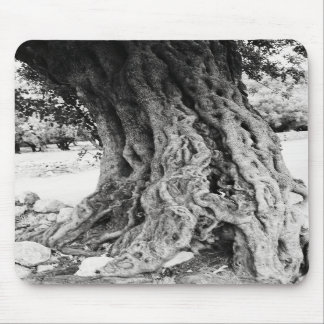 Trunk of ancient Olive tree in Greece photograph Mouse Pads