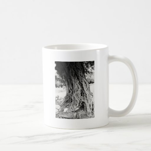 Trunk of ancient Olive tree in Greece photograph Coffee Mugs