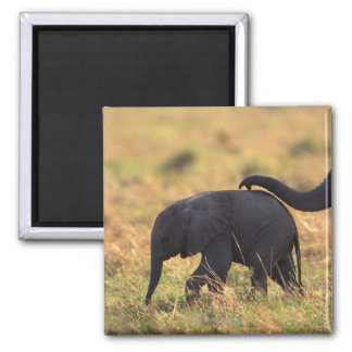 Trunk of elephant touching offspring , Kenya , 2 Inch Square Magnet
