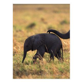 Trunk of elephant touching offspring , Kenya , Postcard