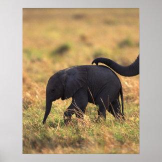 Trunk of elephant touching offspring , Kenya , Poster