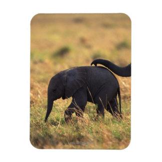 Trunk of elephant touching offspring , Kenya , Rectangular Photo Magnet