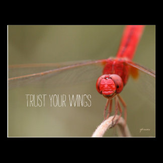 Trust Your Wings Quote Red Dragonfly Postcard