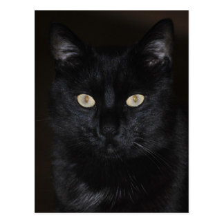 Trusting cat - postcard