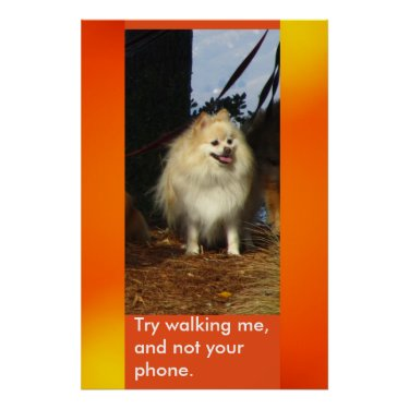 Try walking me, and not your phone