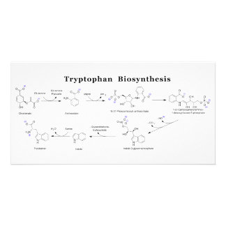 Tryptophan Biosynthesis Chart Card