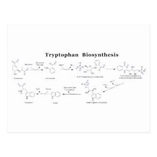 Tryptophan Biosynthesis Chart Postcard