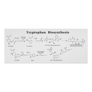 Tryptophan Biosynthesis Chart Poster