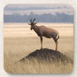 Tsessebe Antelope On Lookout For Predators Beverage Coaster