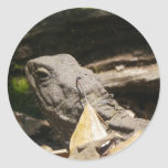 Tuatara - A Living Fossil Classic Round Sticker