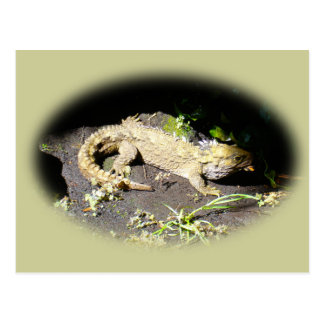 Tuatara - Dinosaur's Only Living Relative Post Card