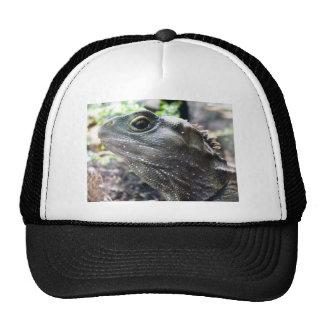 Tuatara Trucker Hat
