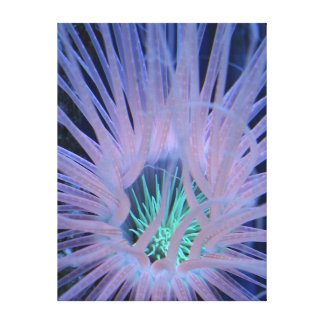 Tube Anemone II - The Reef Collection Canvas Print