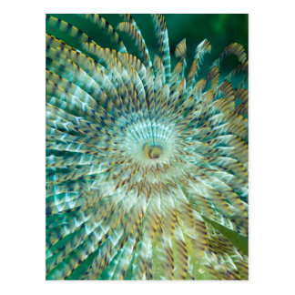 Tube Worm Postcard
