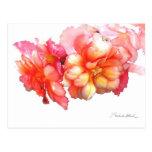 Tuberous Begonia No. 1 Postcard
