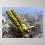 Tubos coralinos verdes de la madera impresiones