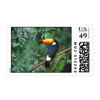 Tucan Bird postage