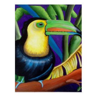 Tucan Tropical Bird Design Postcard