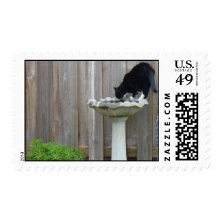 Tucker and the birdbath postage stamp