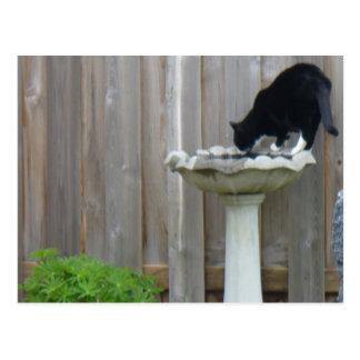 Tucker and the birdbath postcard