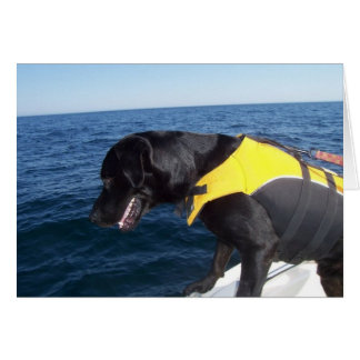 Tucker At Work Conservation Canines Labrador Greeting Cards