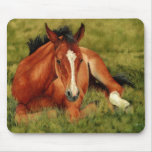 Tuckered Out - Resting Foal Mousepad