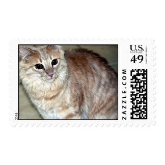Tucson 6 sellos