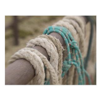 Tucson, Arizona: Ropes and hanrnesses used  on Postcards