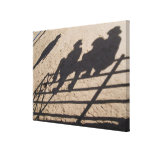 Tucson, Arizona: Shadows of Rodeo competitors Canvas Print