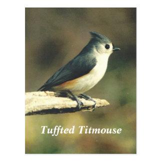 Tuffted Titmouse Postcard