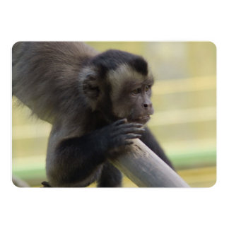 Tufted Capuchin Monkey 5x7 Paper Invitation Card