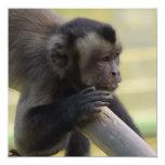 Tufted Capuchin Monkey Invitation