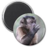 Tufted Capuchin Monkey Photo Fridge Magnet