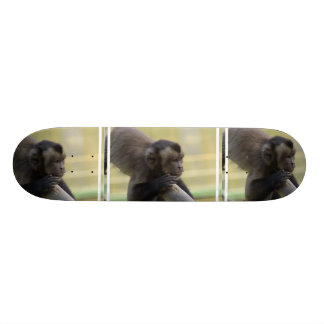 Tufted Capuchin Monkey Skateboard