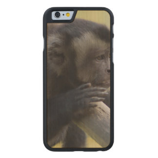 Tufted Capuchin Monkey Carved® Maple iPhone 6 Case