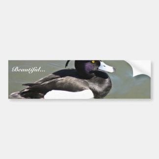 Tufted duck bumper stickers