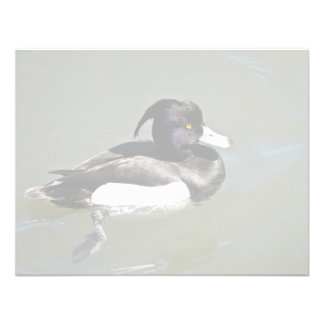 Tufted duck personalized announcement