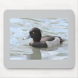 Tufted Duck Mouse Pad