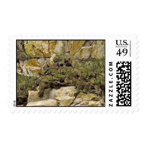 Tufted Puffin burrows, Castle Rock Stamps