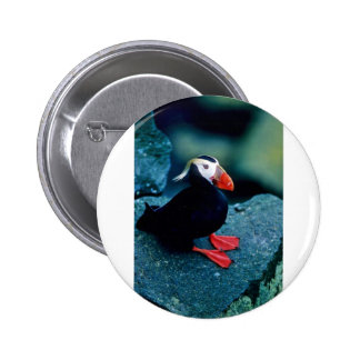 Tufted Puffin Pins