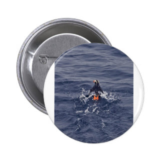 Tufted Puffin Pin