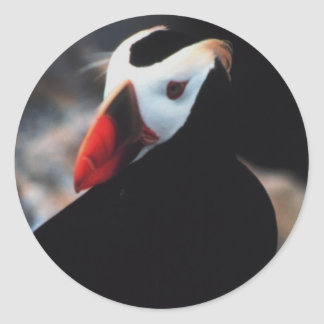 Tufted Puffin Classic Round Sticker