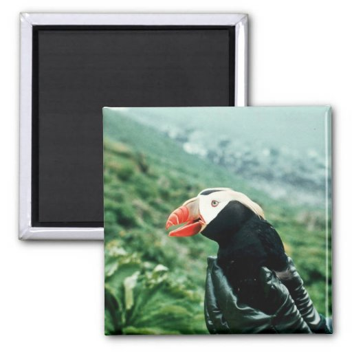 Tufted Puffin in Hand Magnet