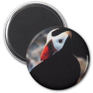 Tufted Puffin Magnet