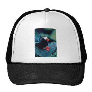 Tufted Puffin Mesh Hat