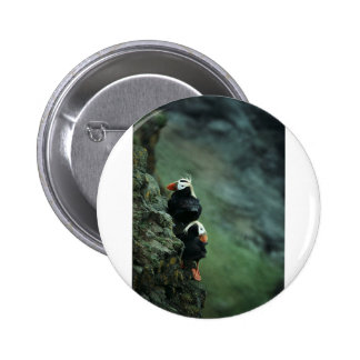 Tufted Puffin Pair Buttons