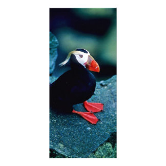Tufted Puffin Rack Card Design